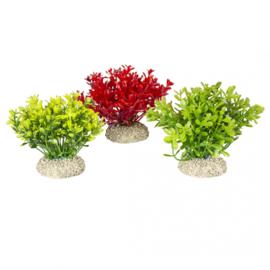 Plant Glosso S 9cm