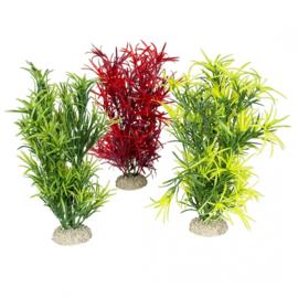 Plant Hydrilla L 27cm