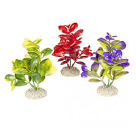 Plant Crassula M 16cm