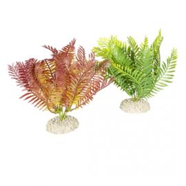 Plant Bolbitis M 17,5cm