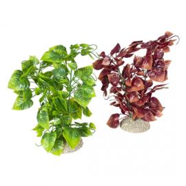 Plant Anubias Nana L 25cm