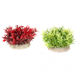 Plant Miracle Moss 7,5cm