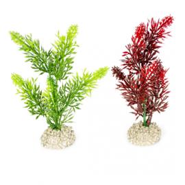 Plant Elodea Densa 13cm