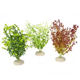 Plant Bacopa M 25cm