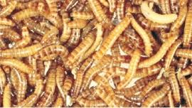 Meelwormen 100 gram