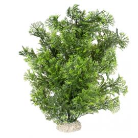 Plant Phoenix Donkergroen 30cm