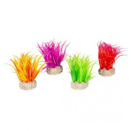 Plant Hiar Grass S 6cm