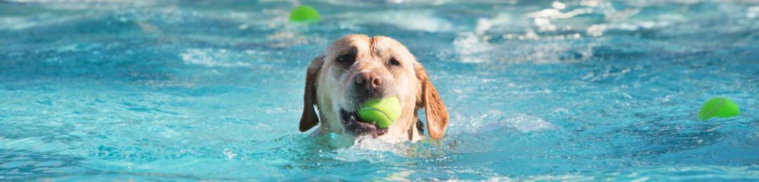 Hond zomer