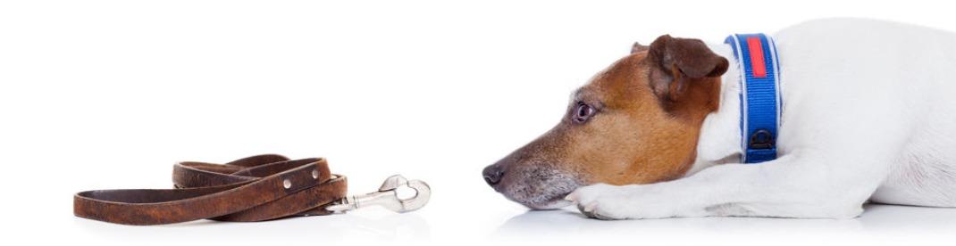 Hondenriemen