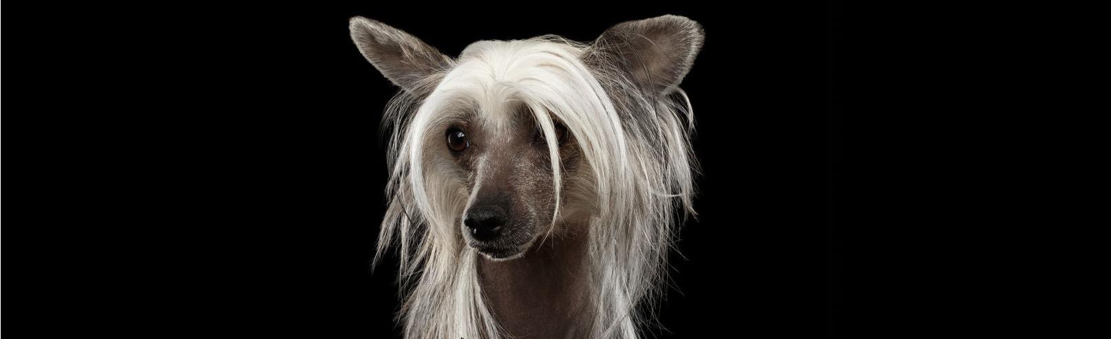 Hond verzorging
