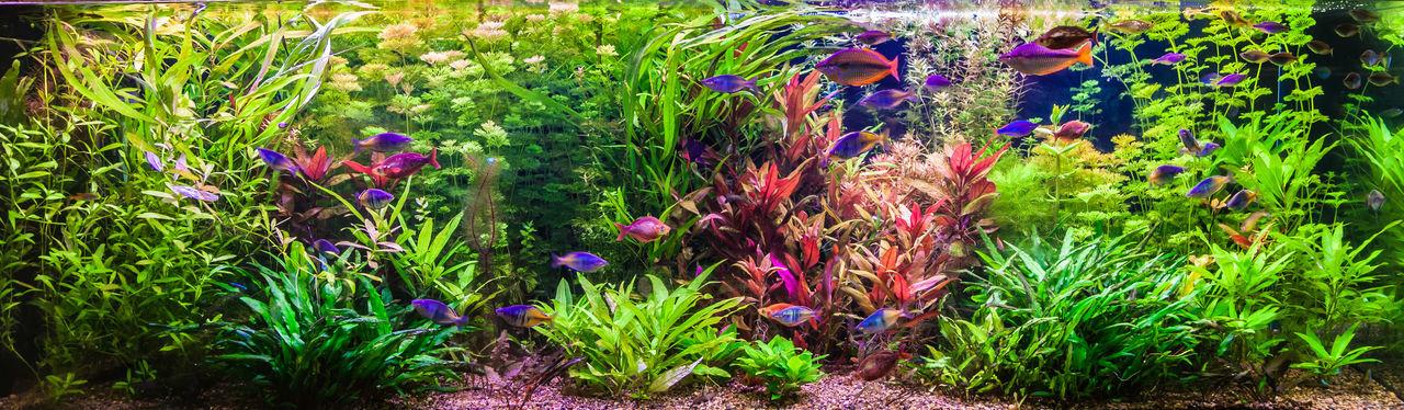 Aquarium met vissen blauw paars