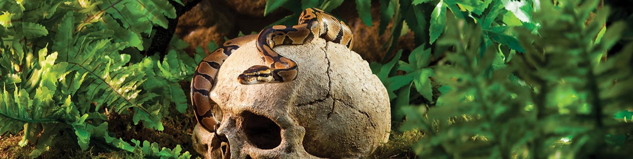 reptiel slang plant