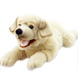 Labrador PC003009