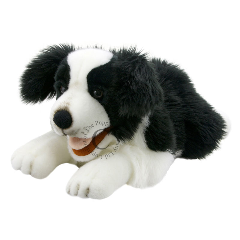 hond Border Collie PC003007