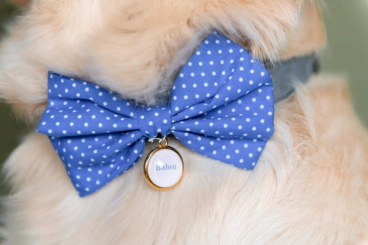 Doggy/cat bow tie