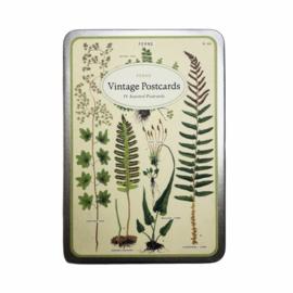 Cavallini & Co. postcard set Ferns
