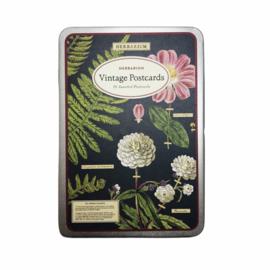 Cavallini & Co. postcard set Herbarium