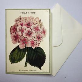 Cavallini & Co. Postcard set Thank You