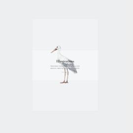 Inkylines postcard set, Illustrations Birds
