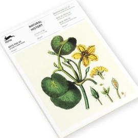Pepin Press - Bloknote A5: Natural History