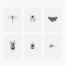 Inkylines postcard set, Insects