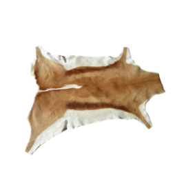 Springbok huid