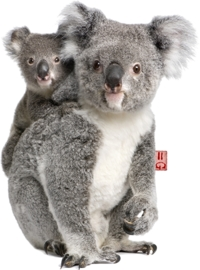 KOALA STRIJKAPPLICATIE