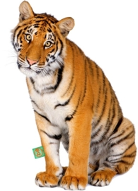 CUTE TIGER STRIJKAPPLICATIE