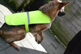 veiligheids- hesjes
