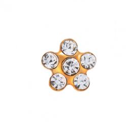 Zweerknopjes wit op gouden bloem