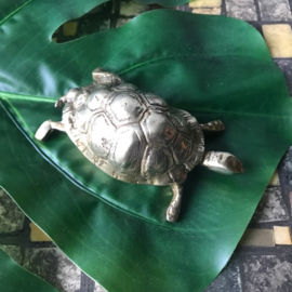 Messing Schildpad