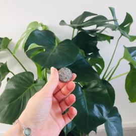 Grondleggers - plantenvoeding voor potplanten - Soil Sisters
