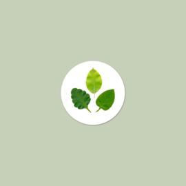 Sluitzegel Groen Blad (15 stuks)