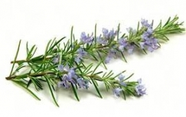 Rozemarijn var. population - folia (Rosmarinus officinalis ct. population - folia) bio - 10ml