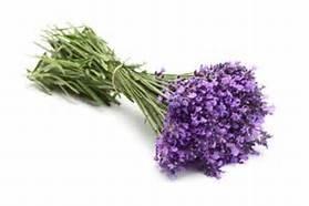 Lavendel, echte (Lavandula angustifolia, var. population) - bio 10 ml
