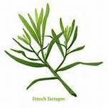 Dragon, Franse - blad (Artemisia dracunculus ct. methylchavicol - folia) - bio - 5 ml