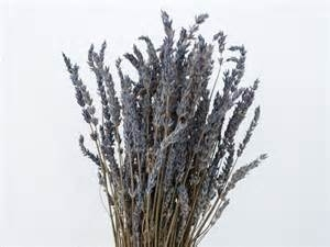 Lavandin, Grosso - bloem (Lavandula x intermedia, Grosso - flores) - bio - 10ml