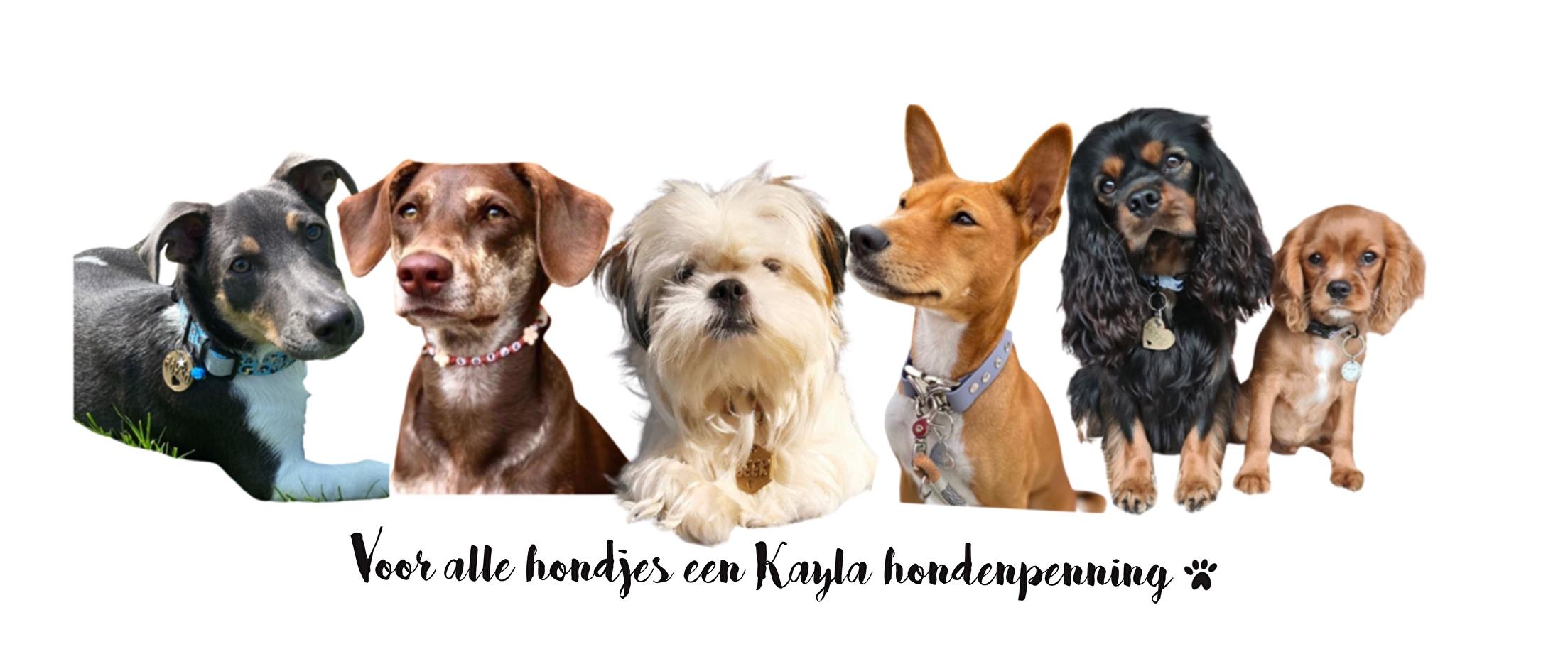 Hondenpenningen van Kayla