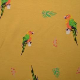 Papegaai geel