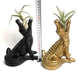 Gouden krokodil + airplant