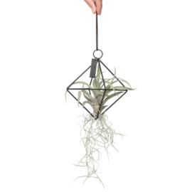 (zwarte) Geometrische hanger + airplant