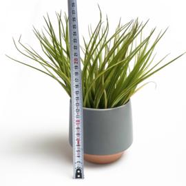 Groot, grijs/terra potje + airplant