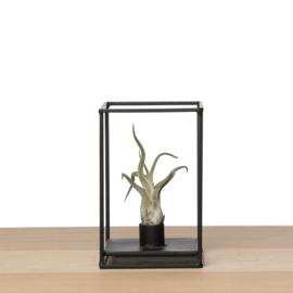 Industriële zwarte houder (met airplant)