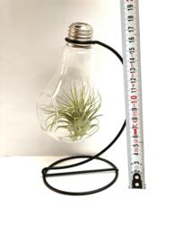 Lightbulb + houder incl. Tillandsia