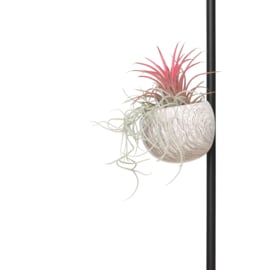 Magneethouder houtlook (marmer look) met airplant