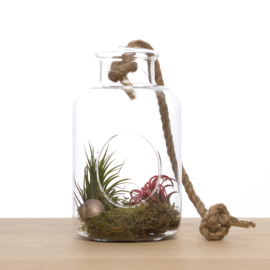 2 airplants in hangvaas