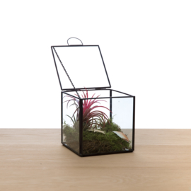 Terrarium met ketting - Ionantha rood