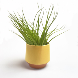 Groot, geel/terra potje + airplant