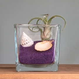 Tillandsia in glas (paars vierkant)
