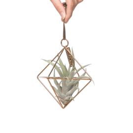 (gouden ) Geometrische hanger + airplant